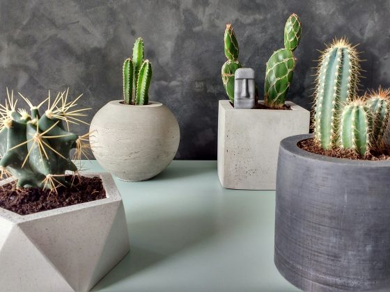 vasos de concreto com cactos