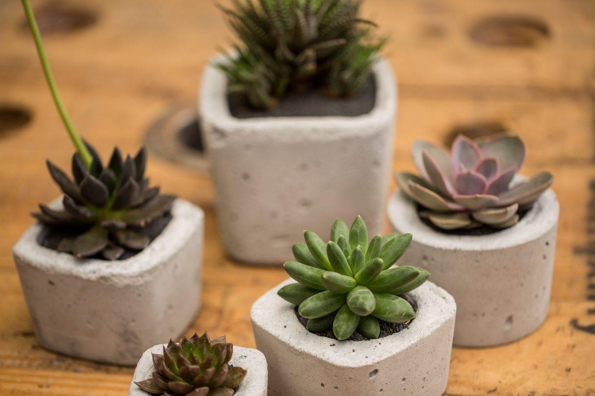 suculentas em vasos de cimento