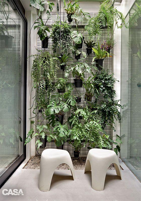 jardim vertical com vários tipos de samambaas