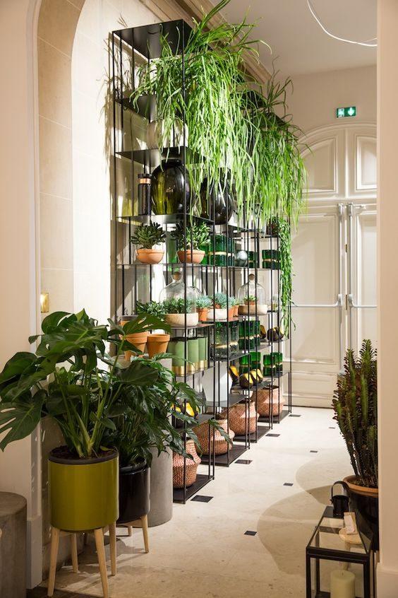 estante de aço com muitas plantas