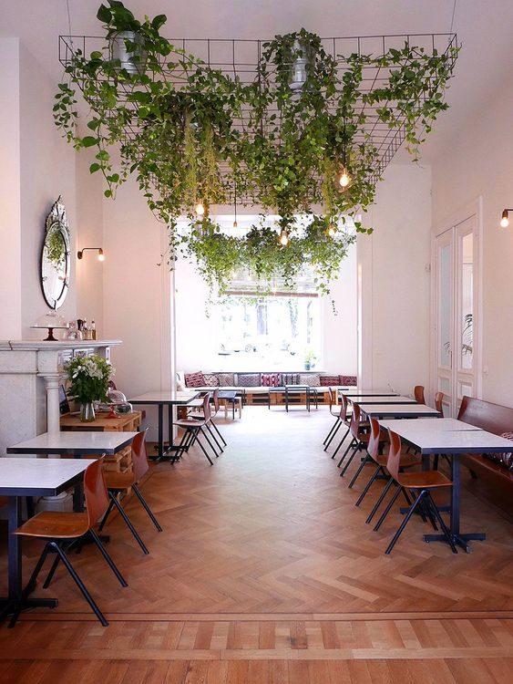 restaurante decorado com muitas samambaias