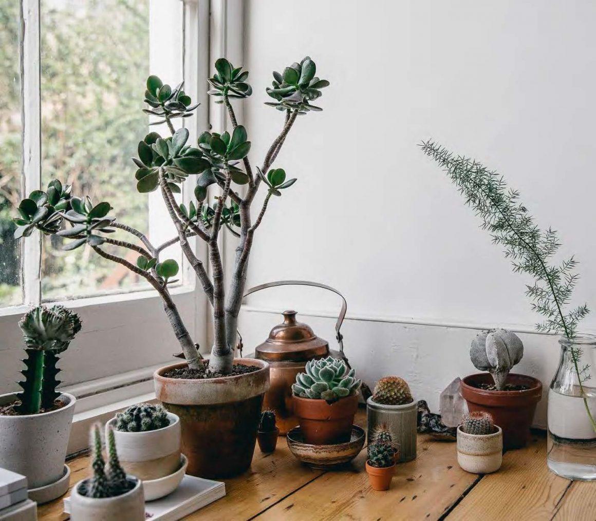 vegetação para ambientes internos