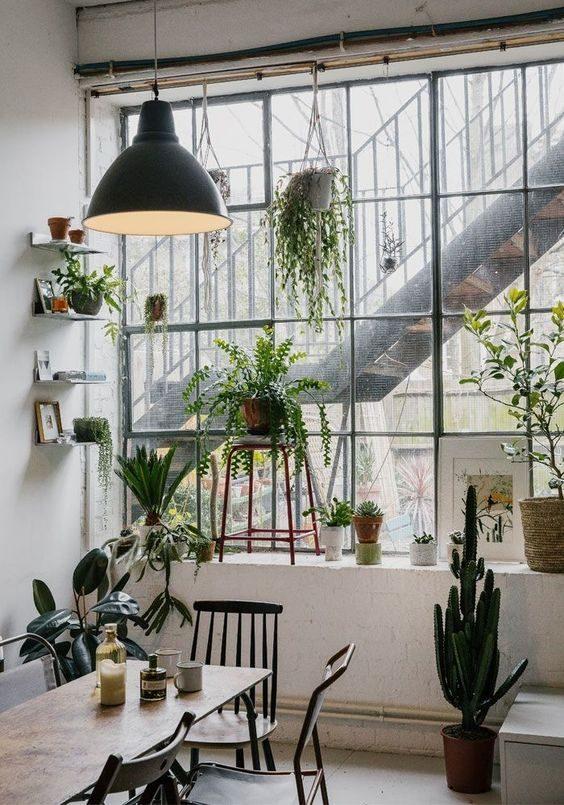 floresta urbana com samambaia na janela